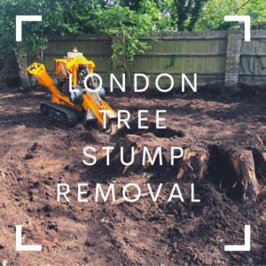 London Tree Stump Removal - Bromley